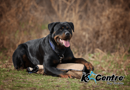Family Protection Dog Training dog trainer Australia