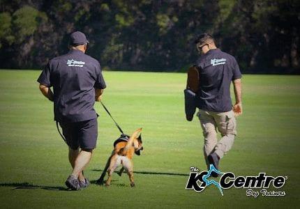 Belgian Malinois Police Dog Training dog trainer Australia