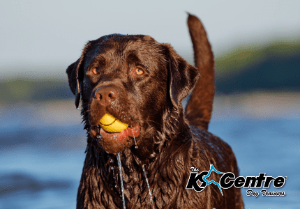 the k9 centre – dog training australia – australia's specialist dog ...