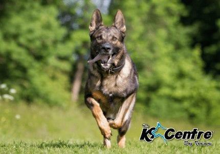 Specialist Police Dog Trainer dog trainer Australia