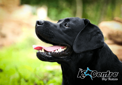 Specialist Scent Detection Dogs dog trainer Australia