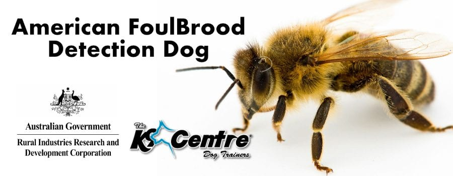 American Foulbrood Detection Dog dog trainer Australia