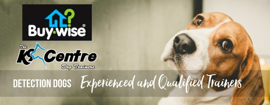 Buywise Termite Detection Dogs dog trainer Australia