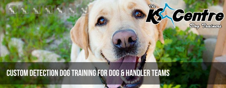 Custom detection dog training Australia dog trainer Australia