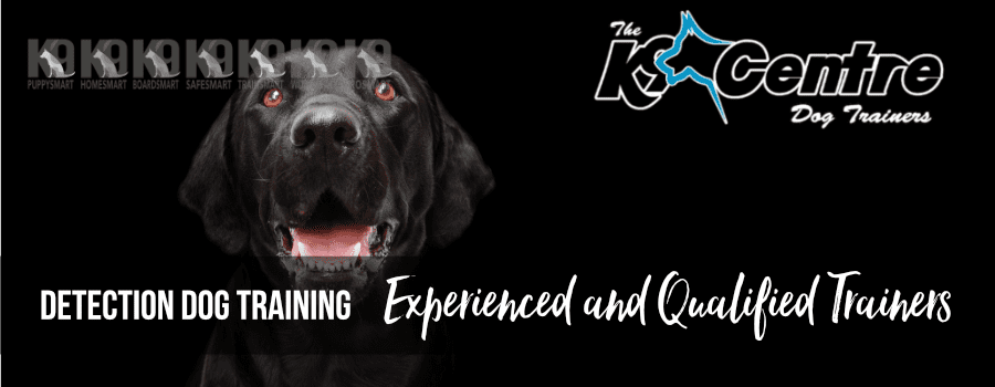 Detection Dog Training and Specialist Services dog trainer Australia