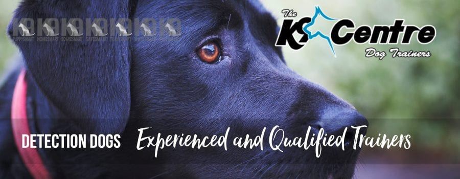Detection Dogs and detection dog training dog trainer Australia