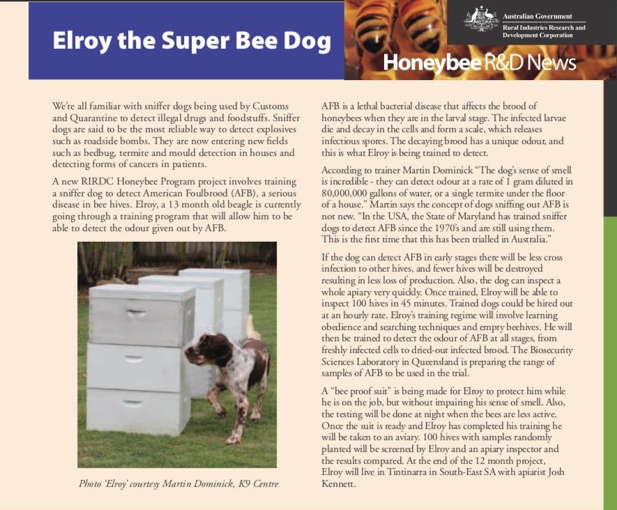 Elroy the first trained Bee disease Detection dog dog trainer Australia