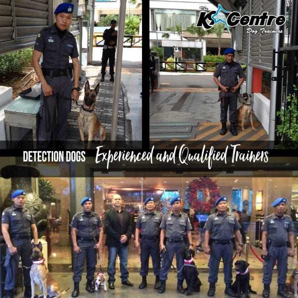 Explosives Detection Dogs and handlers