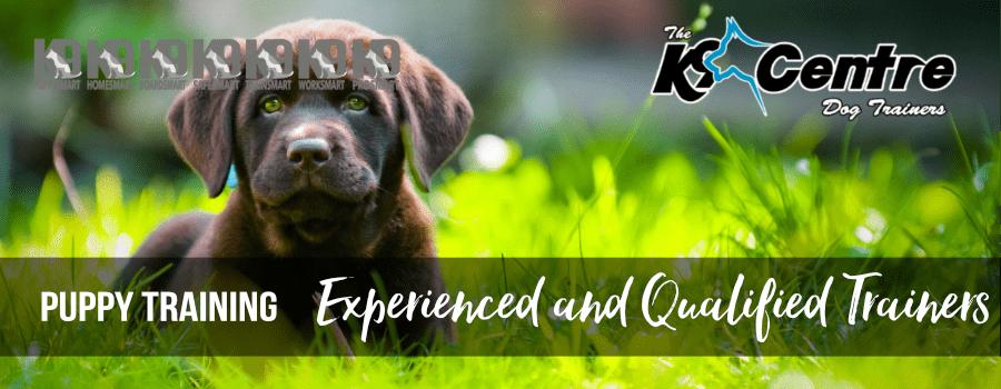 K9 Puppy Smart Puppy Training for all puppies Brisbane all suburbs Queensland dog trainer Australia