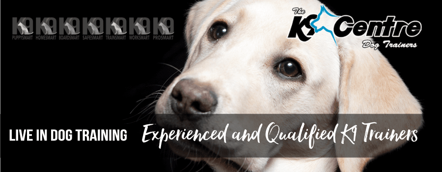 Live in with our trainers dog training Brisbane Queensland K9 Board Smart Courses dog trainer Australia