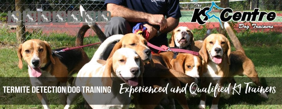 Our highly trained Termite Detection dogs trained to detect dog trainer Australia