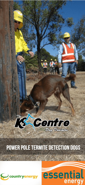 Power Pole Termite Detection Dogs for Essential Energy dog trainer Australia