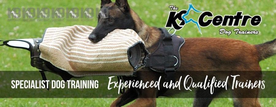Specialist dog training Services dog trainer Australia