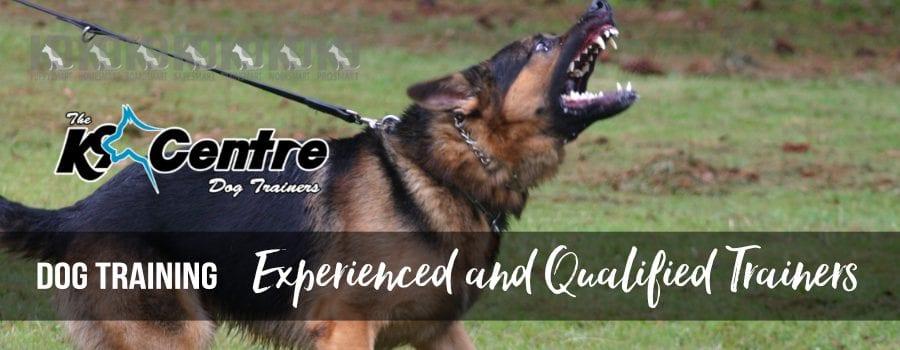 Trained dog K9 Trainers Australia dog trainer Australia