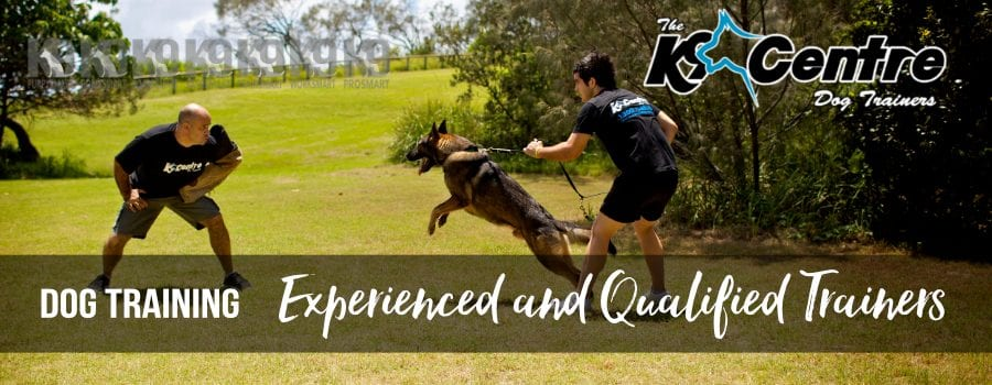 dog training for all dog all breeds all needs dog trainer Australia