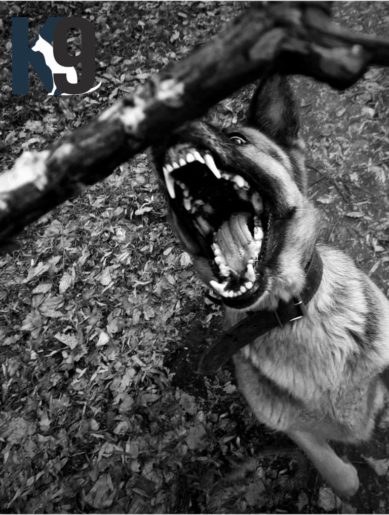 Dangerous Dogs Seminars - The K9 Centre Australia