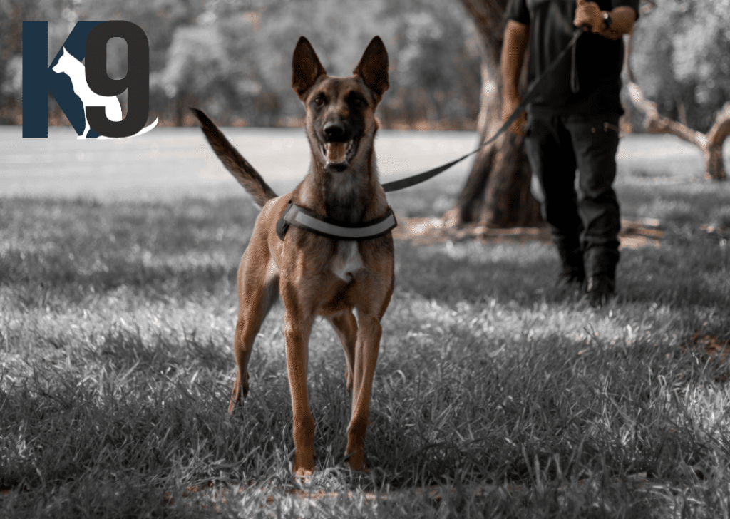 Detection Dog Services - Explosives Searches and Drug Dog Searches