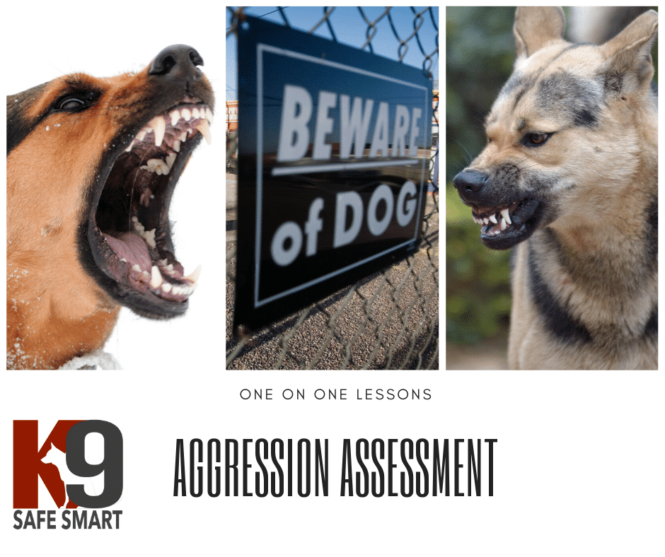 Dog-Aggression-Assessments-by-Martin-Dominick.png