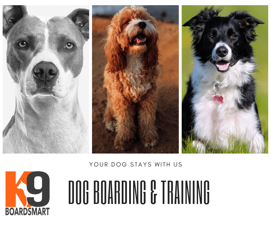 Dog-Training-and-Boarding-The-K9-BoardSmart-Training-Program.png
