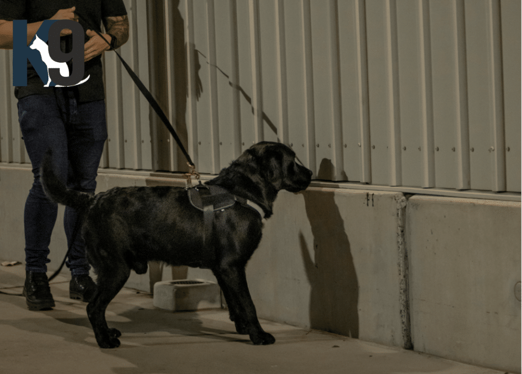 Explosives Detection Dog Sully Trained By Martin Dominick