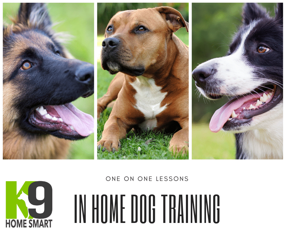 In Home Dog Training Lesson for you and Your Dog