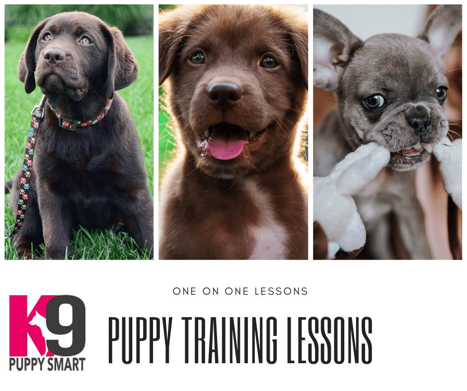 Training your puppy is critical to having an enjoyable lifelong relationship with the pup, you and your family. It helps define the puppy's character and gives you a comfortable level of control as the pup grows.The K9 PuppySmart lessons are normally conducted in the comfort of your home. The K9 PuppySmart ™ Program Includes Basic Puppy Psychology Effective Communication – Human to Canine Equipment Essentials Pre-Command Exercises Owner/Family Interaction Socialisation Exercises Bite Control Exercises Puppy Grooming, Diet and Welfare This program is the essential first step for every puppy owner.