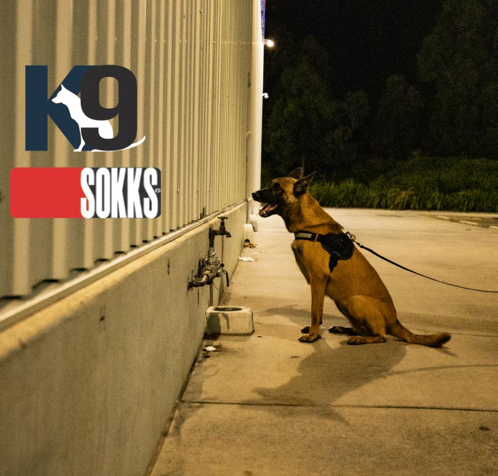 SOKKS Trained Explosives Detection Dog