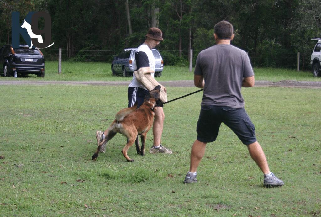 Security Dog Training