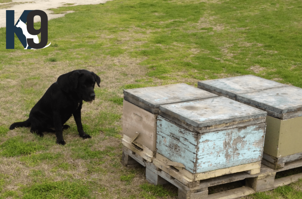 Bee Disease Detection