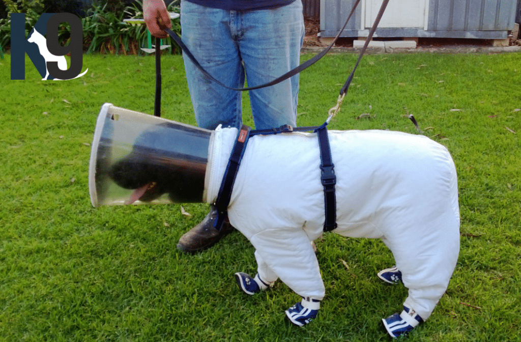 Bee Disease Detection Dog
