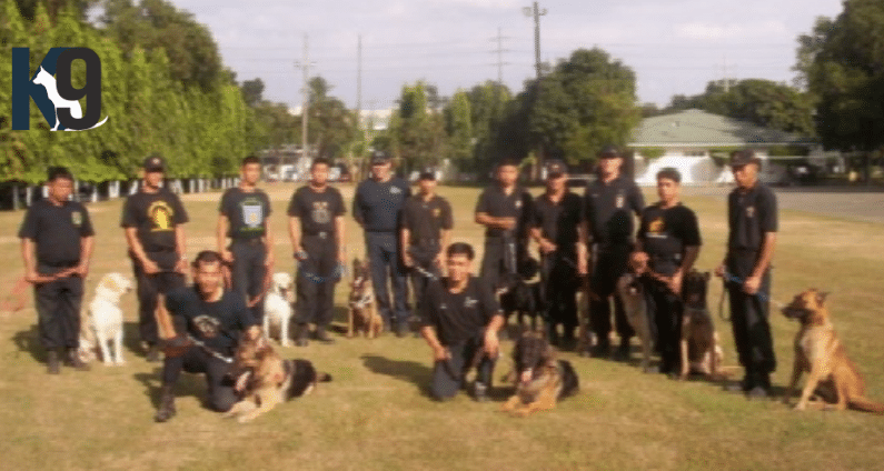 Military Police Dog Training Philippines